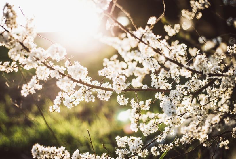 Blüten-Web-10