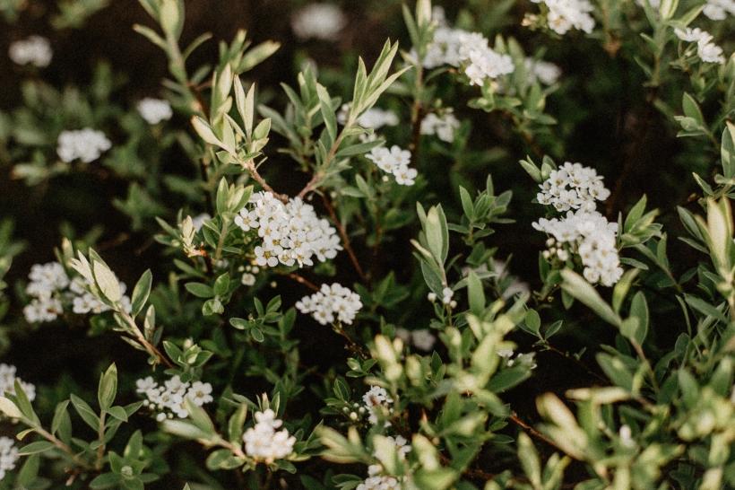 Blüten-Web-4