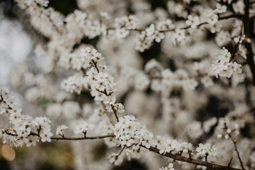 Blüten-Web-5