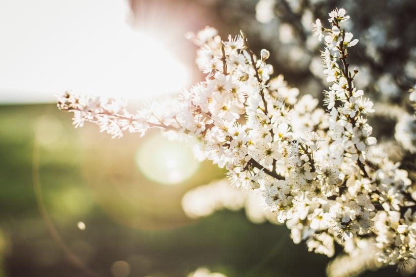 Blüten-Web-7
