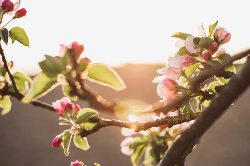 Spring-Web-3