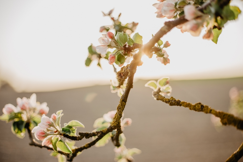 Spring-Web-6